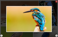 Responsive Image Gallery with jQuery Lightbox